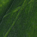 Sap Green Pigment Stick