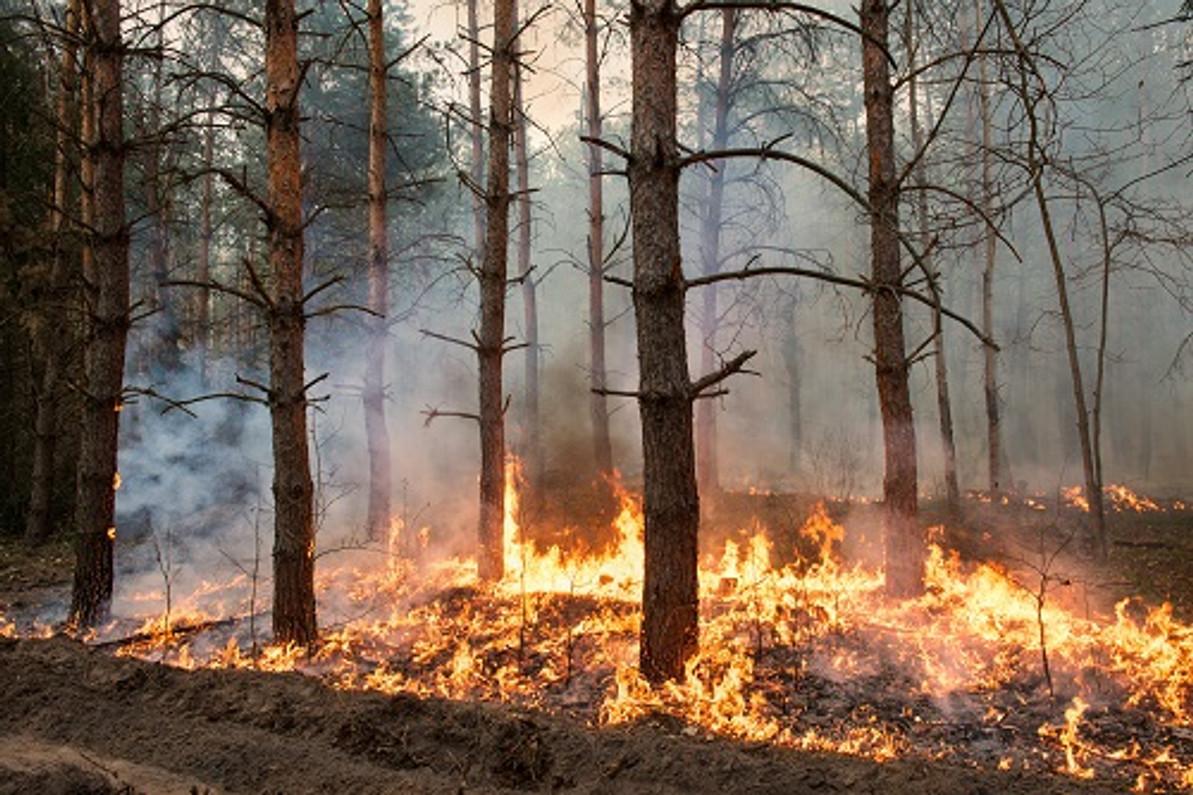 Launching the New Firechief Wildfire Equipment Range