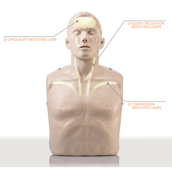 brayden-manikin-cpr-light-diagram.jpg