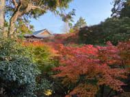 Tofukuji Temple 2020