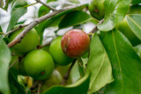5 reasons why Camu camu is the perfect ingredient to treat acne