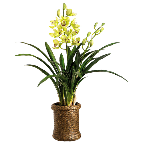 Cymbidium Orchid in Basket 29""