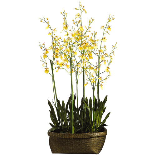 Oncidium Orchid in Basket 60""