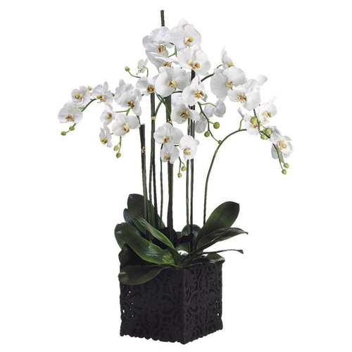 Phalaenopsis Orchid in Ornate Clay Pot 45""
