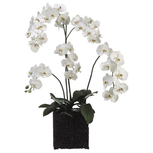 Phalaenopsis Orchid in Decorative Resin Container