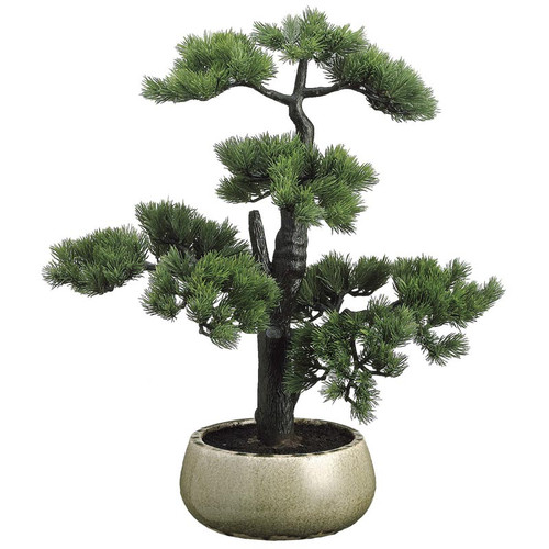 Pine Bonsai in Ceramic Pot 22""