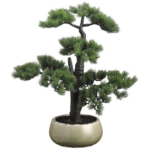 """Pine Bonsai in Ceramic Pot 22"""""""