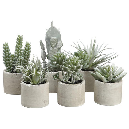 Set of 6 Mini Succulents in Cement Pots