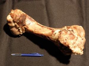 Pet Care Beef Clod Bone