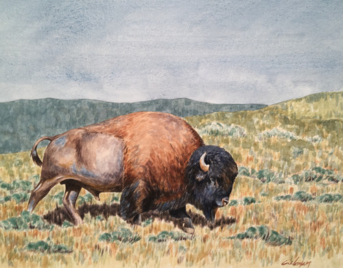"""Lone Bull"" by Cody Witham"