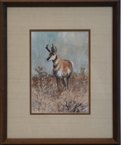 """Pronghorn"" by M. Stanish"