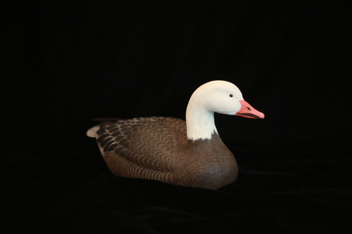 Snow Goose by Connie Tveten