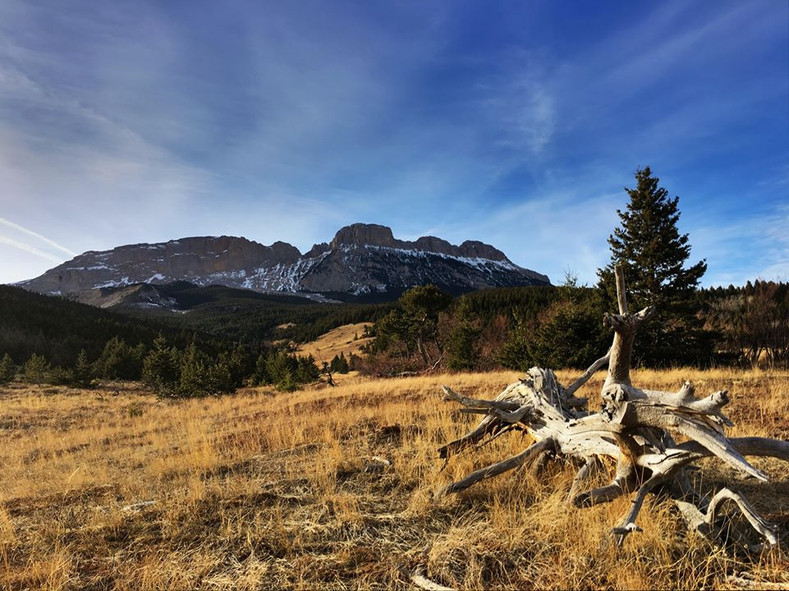 6 Antler-Inspired Pieces for Spring in Montana