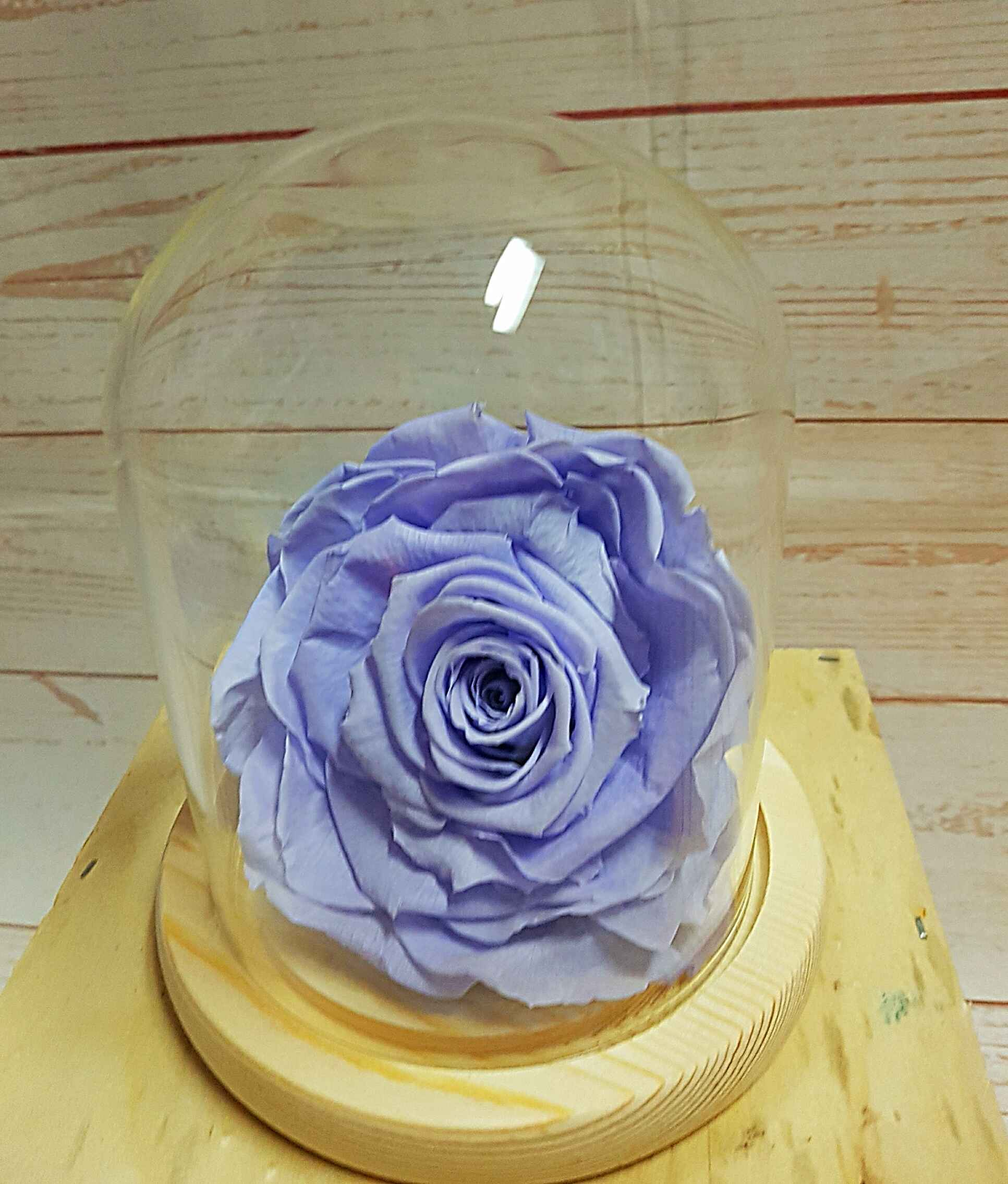 A beautiful, everlasting rose in a cool lavender colour the Kiara preserved rose, is presented in  a glass cloche with a wooden base.The lifespan of the preserved flower is at least 50 times greater than that of a fresh flower.