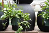 houseplants help keep us healthy