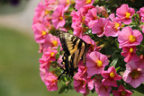 annuals & perennials for pollinators