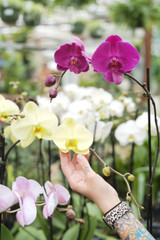 Phalaenopsis Orchid Care and Re-potting