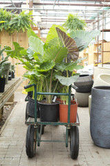 Plant Perks: Houseplants Improve Our Health and Wellbeing