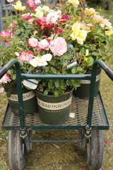 keep plants beautiful all summer long