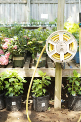 Gardening in the Shade with Perennials