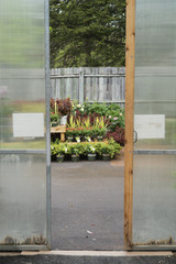 welcome summer with perennials