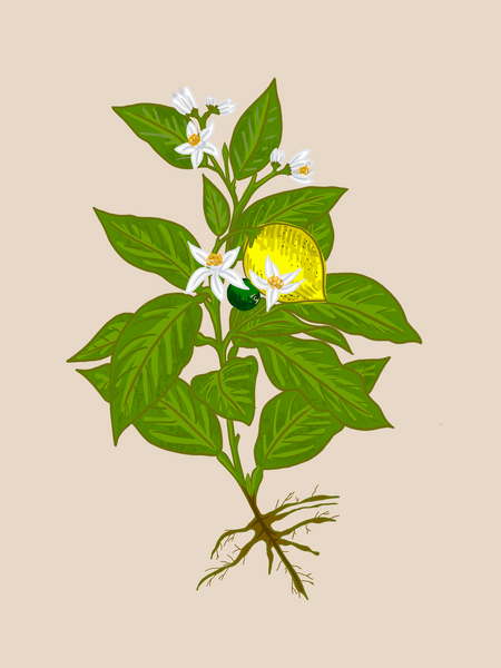 Plant Morphology Guides - The Basics of Plant Care