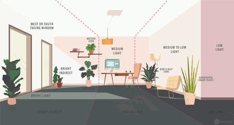 Houseplants – Light Up Their Lives