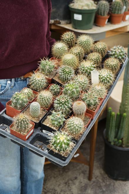 Assorted Mini Cactus - 2 in