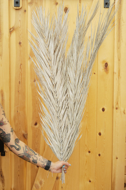 Date Palm Leaves in Frost White