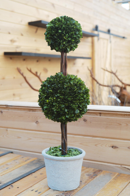 Boxwood Double Ball in Pot
