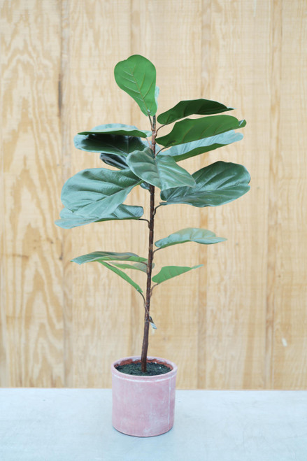 """36"""" Fiddle Leaf Fig in Pot (Faux)"""