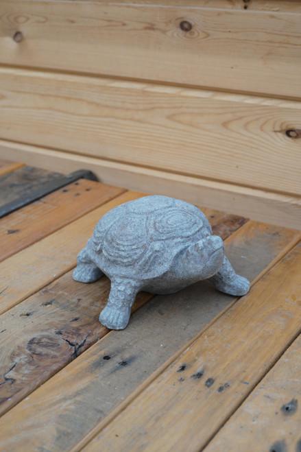 Aged Turtle
