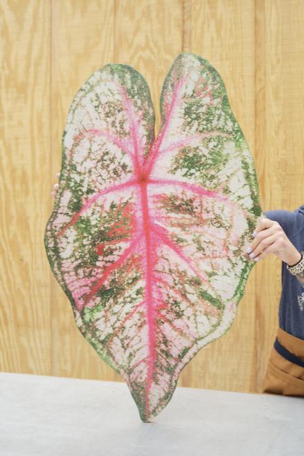 Mosaic Caladium Pink Wall Art