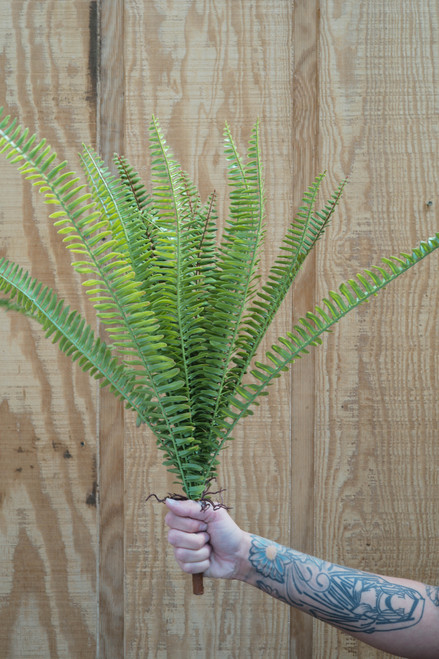 "25"" Sword Fern (Faux)"