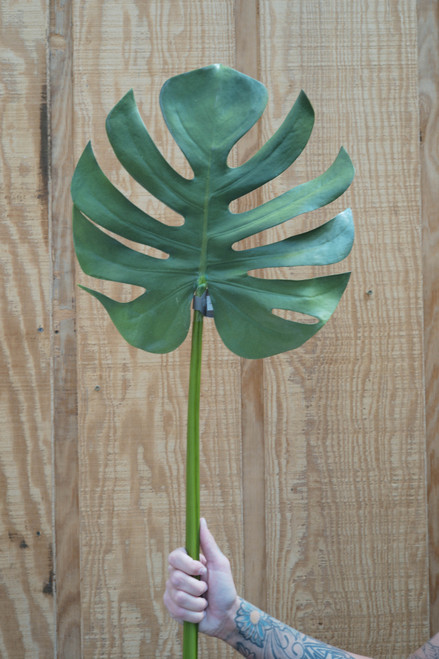 "42"" Monstera Leaf Split (Faux)"