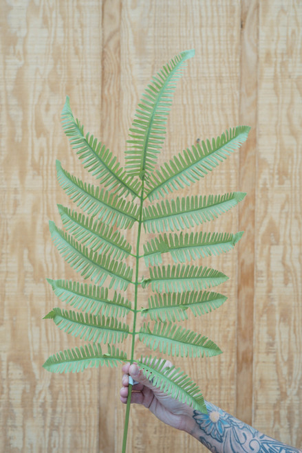 "42.5"" Fern Stem (Faux)"