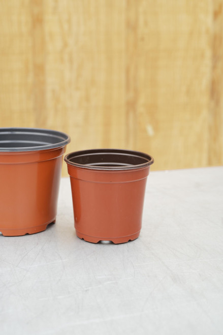 "4"" Standard Round Pot in Terra Cotta"