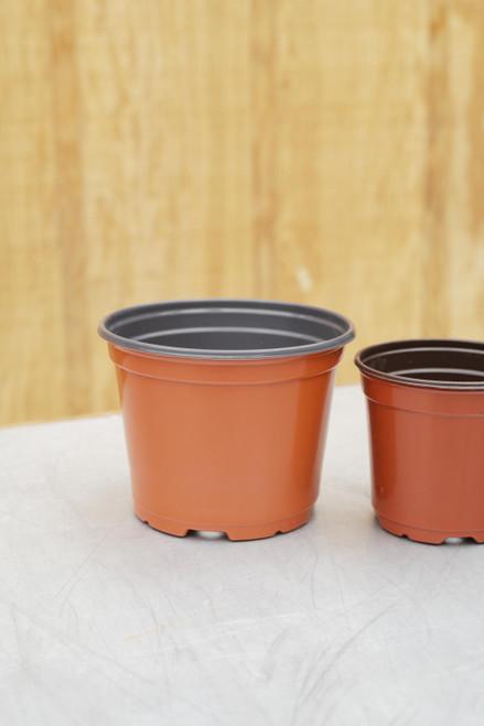 "6"" Standard Round Pot in Terra Cotta"