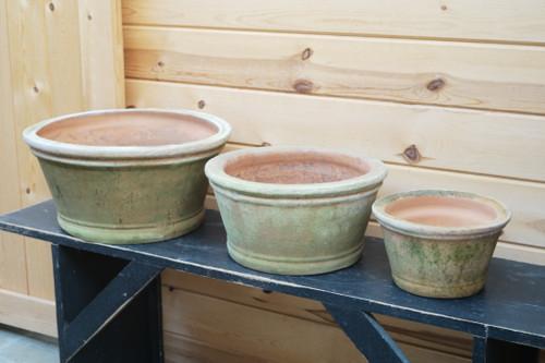 Large Aged Azalea Pot
