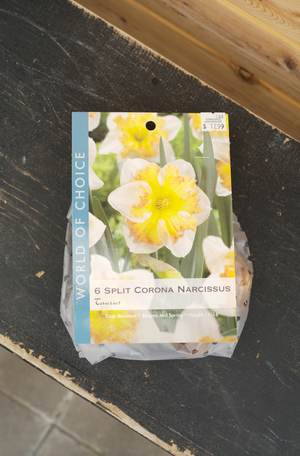 Daffodil Taurus