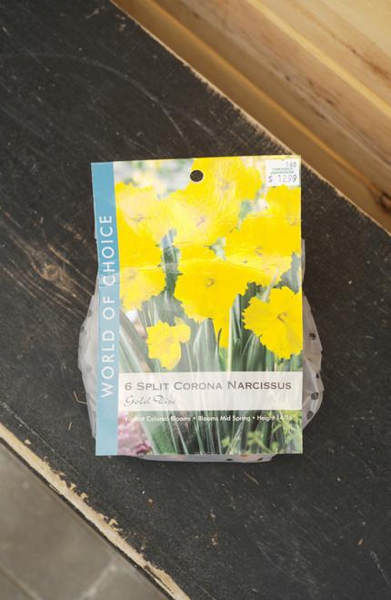 Daffodil Gold Disc