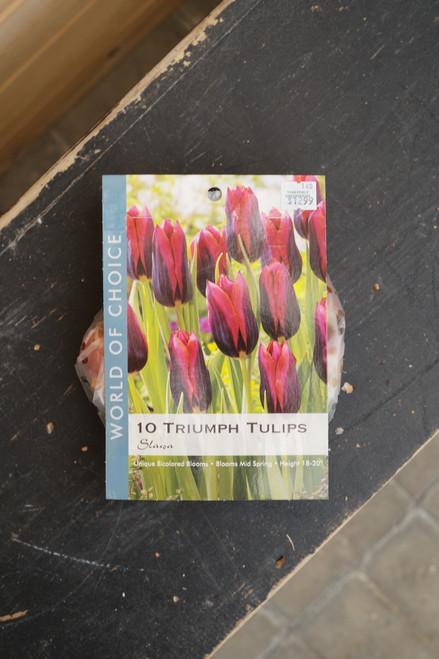 Tulip Triumph Slawa