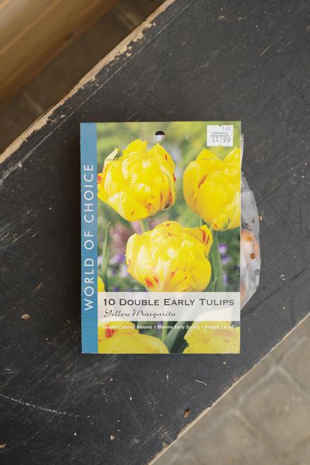 Tulip Double Early Yellow Margarita