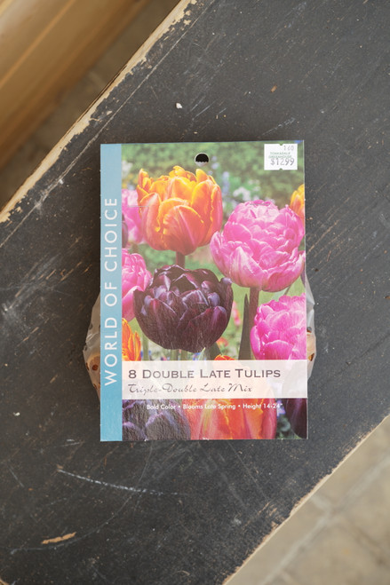 Tulip Double Late Mix