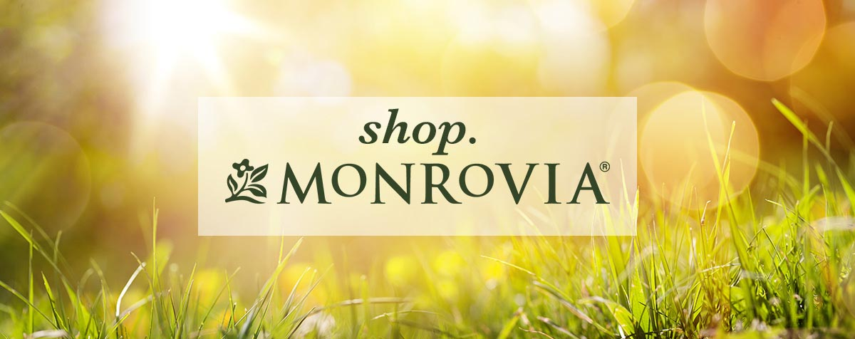 shop-monrovia-header.jpg