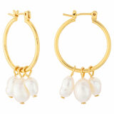 Oroton Farah Hoops in Gold and Brass Base Metal With Precious Metal Plating for female