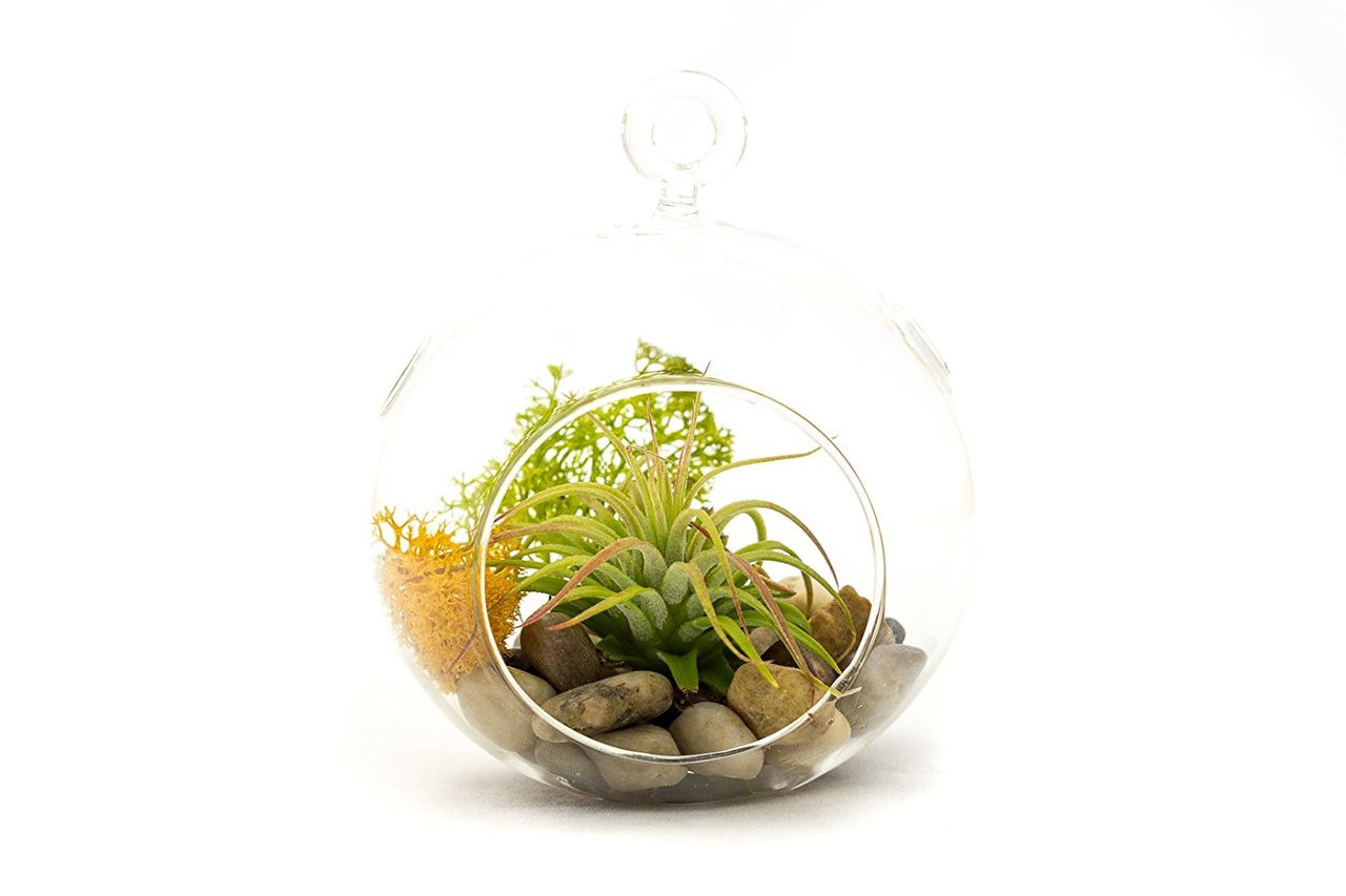 Diy Gift Set 4 Standing Glass Globe Terrarium Container Stony