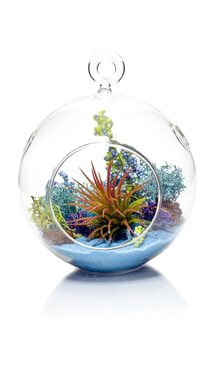 Diy Gift Set 4 Standing Glass Globe Air Plant Terrarium Container