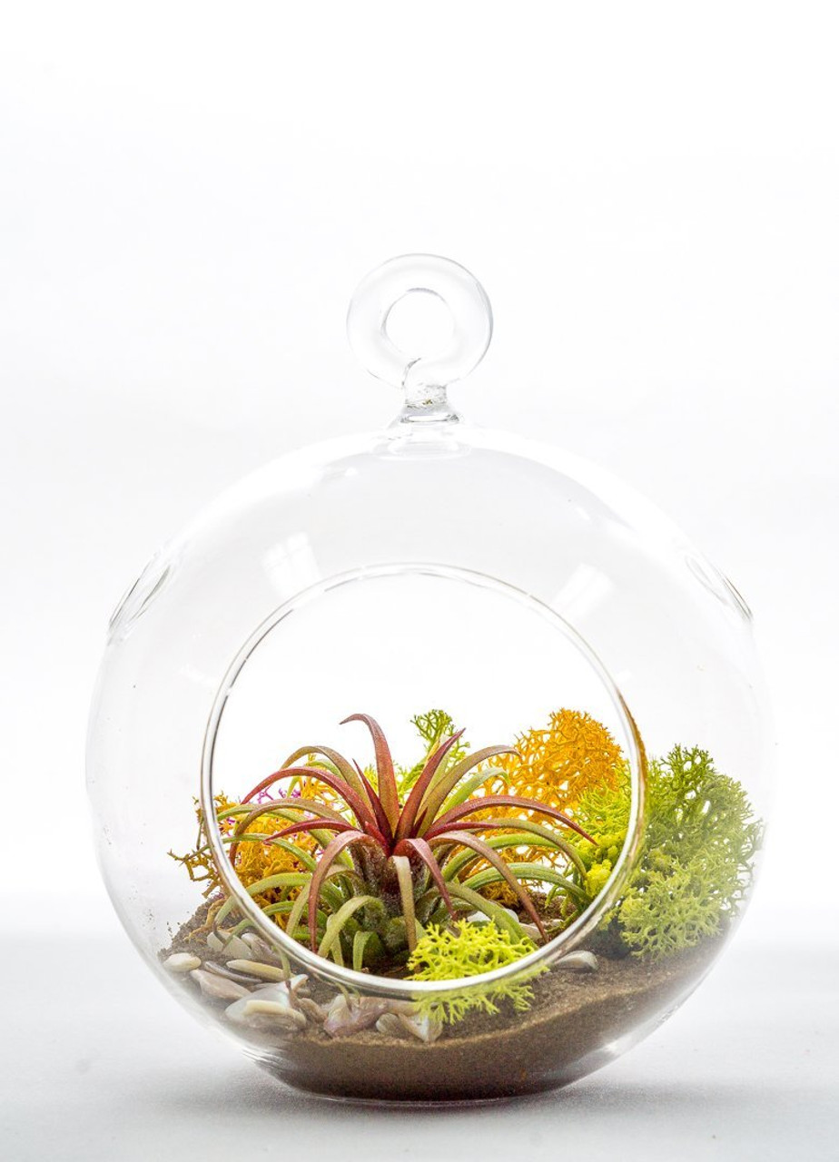 Diy Gift Set Standing Glass Globe Terrarium Container Desert Bloom
