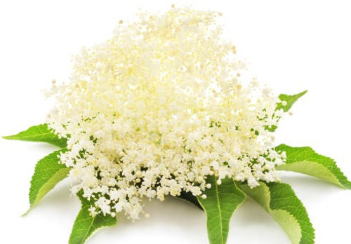 Item # MCH489 Elderflower ​ #MCH489 #MCH489 Elderflower   ​Delicate cream colored flower heads of elderflower lend a honeysuckle-like floral note, that is both crispy and juicy to our white balsamic. Great for mixed drinks, shrubs, cocktails, spritzers, glazes, dressings. Pairs great with lemon oils. 4% acidity